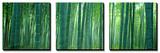 Forêt de bambous à Sagano (Kyoto), Japon Posters par  Panoramic Images