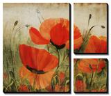 Poppy Daze Affiches par Farrell Douglass