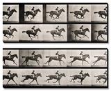 "Jockey on a Galloping Horse, Plate 627 from ""Animal Locomotion,"" 1887 ポスター : エドワード・メイブリッジ"
