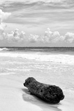 ¡Viva Mexico! B&W Collection - Tree Trunk on a Caribbean Beach III Fotografie-Druck von Philippe Hugonnard